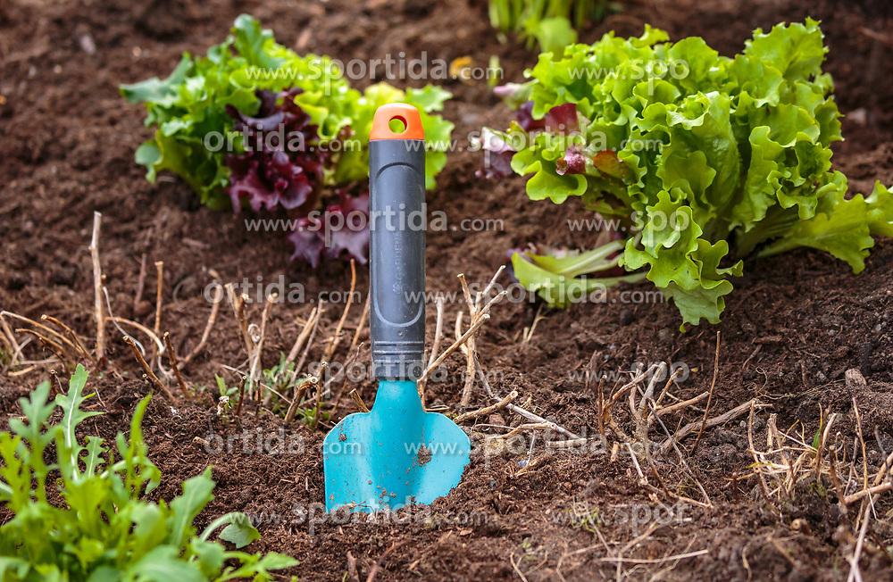 THEMENBILD - eine Gartenschaufel steckt in der Erde, aufgenommen am 10. April 2018 in Kaprun, Österreich // a garden shovel is stuck in the ground next to lettuce plants, Kaprun, Austria on 2018/04/10. EXPA Pictures © 2018, PhotoCredit: EXPA/ JFK
