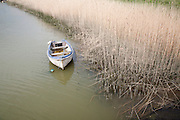 Small boat moored next to reeds on the River Alde at Snape, Suffolk, England