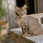 A kitten in Puglia, Italy