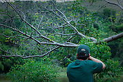 Juiz de Fora_MG, Brasil...Fotografo que fotografa e reune fotos de  aves e informacoes sobre 1500 das 1800 especies brasileiras, Wikiaves, em Juiz de Fora, Minas Gerais...Photographer who shoots pictures of birds and gather information on 1500 and 1800 Brazilian species, Wikiaves, em Juiz de Fora, Minas Gerais...Foto: BRUNO MAGALHAES / NITRO