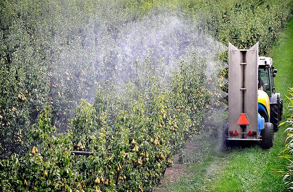 Nederland, Ooij, 14-9-2012 Een tuinder rijdt door zijn perenboomgaard en spuit gewasbeschermingsmiddel op de peren die rijp zijn voor de oogst. Foto: Flip Franssen/Hollandse Hoogte