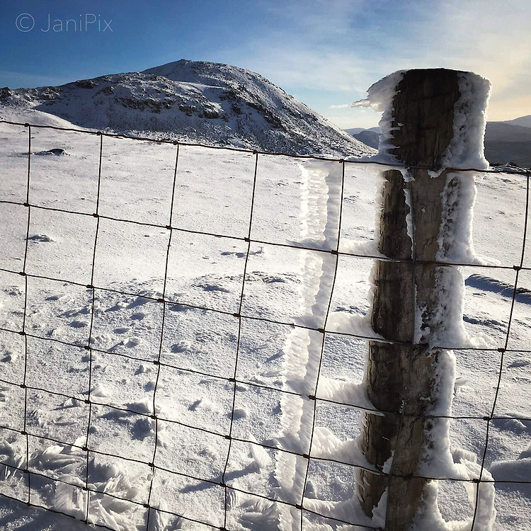 Rime Frost on a long fence crossing the ridge of Arenig Fawr