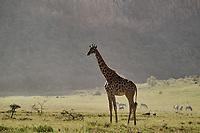 Kenya, region de Nakuru, parc national de Hell's Gate, girafe // Kenya, Nakuru county, Hell's Gate National Park, giraffe