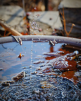 Solar fountain in the bird bath. Image taken with a Fuji X-T2 camera and 100-400 mm OIS lens (ISO 500, 165 mm, f/5.6, 1/800 sec)