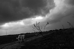brindisi - campagna intorno a rione s.elia