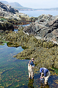 College of the Atlantic students gathering data at Otter Cliffs in Acadia National Park, Maine.