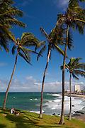 Salvador_BA, Brasil...Litoral de Salvador, capital da Bahia. Na foto coqueiros na Praia da Barra...Coast of Salvador, capital of Bahia. In the photo coconut tree at the Praia da Barra...Foto: JOAO MARCOS ROSA / NITRO