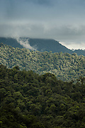 Cloud Forest, Mashpi Reserve, Distrito Metropolitano de Quito, Ecuador, South America