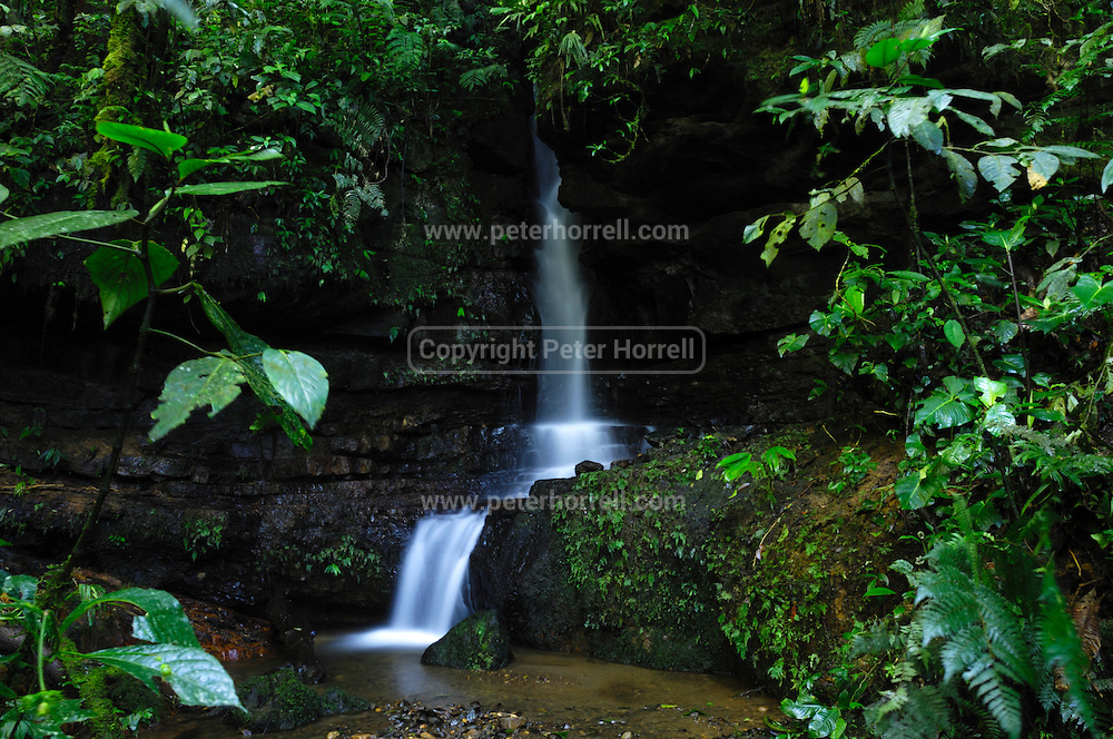 Ecuador, May 18 2010: Images from Wild Sumaco...Copyright 2010 Peter Horrell