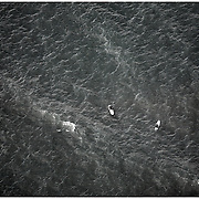 WRIGHTSVILLE BEACH, NC - Aerials of surfers in the water.