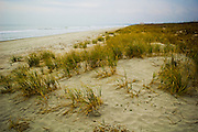 Sea oats growing on dunes and overlooking the morning surf in Huntington Beach State Park, South Carolina.