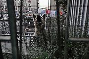 Un cane abbaia in un cortile interno di una casa del quartiere Tamburi. Christian Mantuano/OneShot