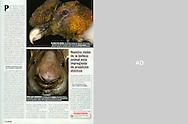 Publication: MUY INTERESANTE (Spain), # 326, July 2008, Photography by Heidi & Hans-Juergen Koch/animal-affairs.com