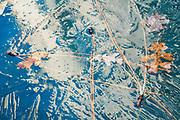Ice, Pine Needles and Oak Leaves, Ahwahnee, California 2017