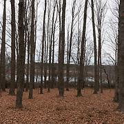 Fall woods at Ipswich River Wildlife Sanctuary, Topsfield, MA