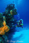 diver photographs reef with <br /> orange sponges, Agelas cladrodes, <br /> Cozumel, Mexico ( Caribbean Sea )<br /> MR 140 - MR 142