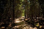 Great Head Trail