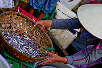 Woman wearing a conical hat weighing a basket of fish at the Hoi An riverside fish market.