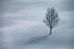 THEMENBILD, ein Baum auf einem Schneebedeckten Feld, aufgenommen in Saalfelden, Oesterreich am 11. Feber 2015 // a tree on a field covered with Snow, Saalfelden, Austria on 2015/02/11. EXPA Pictures © 2015, PhotoCredit: EXPA/ JFK