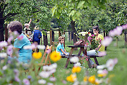 Nederland,Nijmegen, 26-7-2014De historische tuin De Warmoes in Lent was open voor publiek. Men kon zelf pruimen en bloemen plukken.Een boomgaard, Warmoes, met eeuwenoude hoogstam fruitbomen. Een warmoes is een boomgaard met ertussenin stroken grond waar groente op wordt verbouwd, geteeld. De opbrengst, producten worden naar de markt in de stad gebracht. Foto: Flip Franssen/Hollandse Hoogte