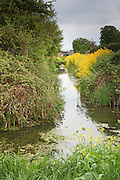 View along the rhyne running through the village of Wembdon, near Bridgwater.