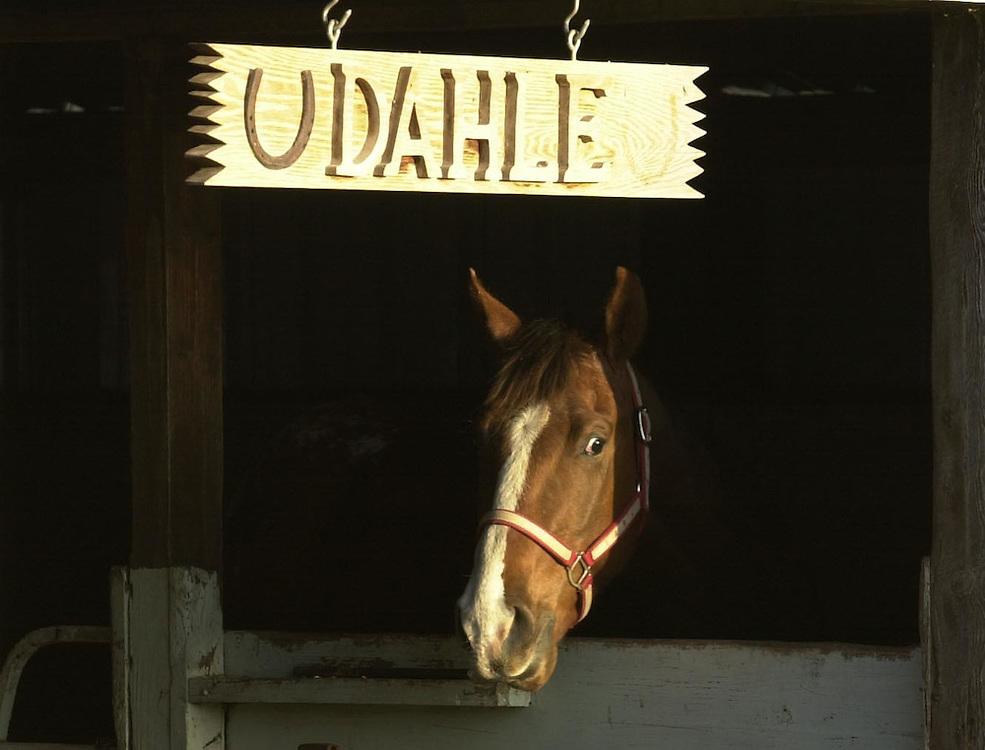 Dahle Horse Ranch in Lewiston, Utah.  Photo by August Miller