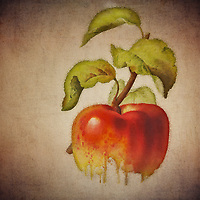 What is the old saying about an apple a day? This beautiful image by Jan Keteleer shows a simple visual, yet takes that simple visual into some truly fascinating territory. This is an image that has the ability to captivate you with its unique touches. There is something very arresting about this fine art piece.<br /> -<br /> BUY THIS PRINT AT<br /> <br /> FINE ART AMERICA<br /> ENGLISH<br /> https://janke.pixels.com/featured/1-apple-jan-keteleer.html<br /> <br /> <br /> WADM / OH MY PRINTS<br /> DUTCH / FRENCH / GERMAN<br /> https://www.werkaandemuur.nl/nl/shopwerk/Rode-appel---Antieke-tekening-van-een-Rode-appel-Bloemen-Collectie-C-designed-by-Jan-Keteleer/478917/134