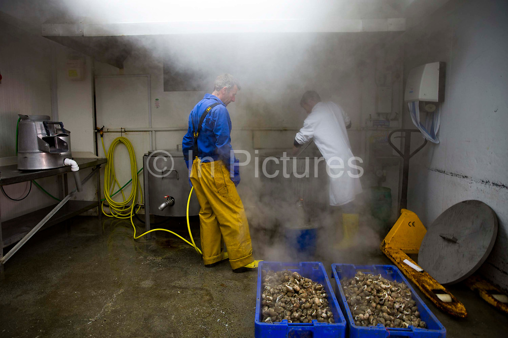 Once the whelks are ready they are removed from the large pot of boiling water with a sieve and put still steaming into boxes ready for shelling.   Folkestone Trawlers, process manage and market all fresh fish that is landed into Folkestone Harbour by local Fishermen. Folkestone, Kent. United Kingdom. A seaside town founded on its fishing industry which dates back to pre-Roman times. During its heyday there were over 100 boats operating out of the busy harbour and employing over 1000 people in the town. In 2016 there are 7 working boats left, employing just over 20 people. The boats are owned and managed by Folkestone families who have a strong fishing heritage.
