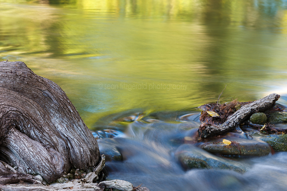 Cypress tree roots and flowing water, James Kiehl River Bend Park, Guadalupe River near Comfort, Texas USA