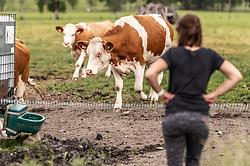 THEMENBILD - eine Frau steht vor einer Herde Kühe, aufgenommen am 10. Juni 2019 in Kaprun, Österreich // a woman stands in front of a herd of cows, Kaprun, Austria on 2019/06/10. EXPA Pictures © 2019, PhotoCredit: EXPA/ JFK