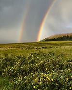 VALLE GRANDE RAINBOWS, FOG, DEW, WILDFLOWERS, ORB WEBS