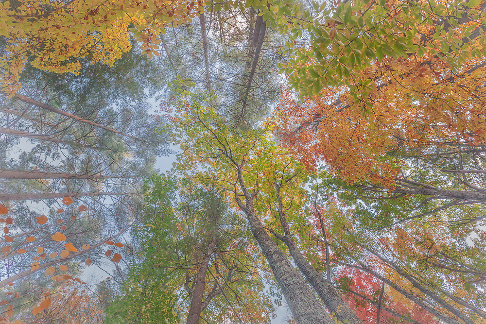 A dazzling kaleidoscope of colors under the canopy of a forest in Vermont.