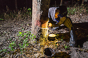 """15 DECEMBER 2014 - CHUM SAENG, RAYONG, THAILAND: WIN, a laborer on a large rubber plantation in eastern Thailand, taps a rubber tree. Rubber trees are tapped at night and the latex collected from the base of each tree in the morning. Thailand is the second leading rubber exporter in the world. In the last two years, the price paid to rubber farmers has plunged from approximately 190 Baht per kilo (about $6.10 US) to 45 Baht per kilo (about $1.20 US). It costs about 65 Baht per kilo to produce rubber ($2.05 US). Prices have plunged 5 percent since September, when rubber was about 52Baht per kilo. Some rubber farmers have taken jobs in the construction trade or in Bangkok to provide for their families during the slump. The Thai government recently announced a """"Rubber Fund"""" to assist small farm owners but said prices won't rebound until production is cut and world demand for rubber picks up.        PHOTO BY JACK KURTZ"""