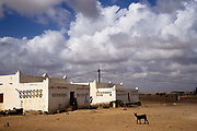 Traditional houses and a goat in Obock, Republic of Djibouti