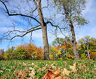 Trees And Fallen Leaves In Autumn, Sharon Woods, Southwestern Ohio, USA