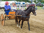 Carriage drive at the Ludwig's Corner Horse Show.