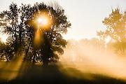Morning Light through trees.