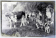 eroding glass plate with scenic countryside view of dogs barking at some calves