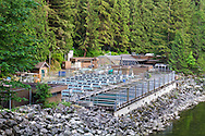 The Capilano Fish Hatchery along the Capilano River in Capliano River Regional Park - North Vancouver, British Columbia, Canada. Photographed from the viewpoint at the end of Second Canyon Trail.