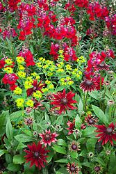 Antirrhinum 'Liberty Classic Crimson' F1(Snapdragon) with Euphorbia oblongata and Rudbeckia hirta 'Cherry Brandy' (Coneflower, Black-eyed Susan)