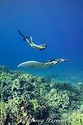 free-diver Sandy Hammel greets Vallaray, a small female reef manta ray, Manta alfredi, at Veto's Reef, off Kekaha Kai State Park, north Kona, Hawaii Island ( the Big Island ), Hawaiian Islands, United States ( Central Pacific Ocean ) MR 489