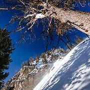 Andrew Whiteford skis powder in the Teton backcountry near Jackson Hole Mountain Resort in Teton Village, Wyoming.