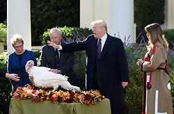 """First lady Melania Trump watches as President Donald Trump pardons """"Peas""""from South Dakota at the National Thanksgiving Turkey pardoning ceremony in the Rose Garden of the White House in Washington, DC on November 20, 2018. Photo by Olivier Douliery/ABACAPRESS.COM"""