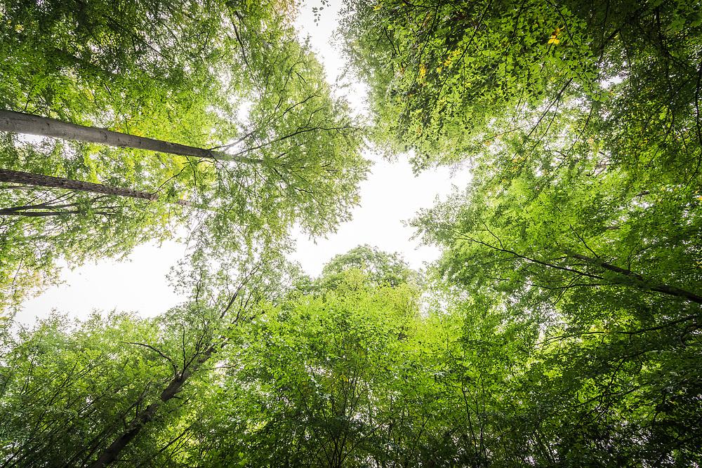 Homberg/Ohm, DEU, 04.10.2020<br /> <br /> Dannenroeder Wald, Dannenroeder Forst<br /> <br /> Ein Teil des Waldes soll fuer den Weiterbau der Autobahn A49 gerodet werden, es gibt Besetzungen und Proteste<br /> <br /> Foto: Bernd Lauter/berndlauter.com