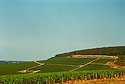 Chablis: the Fourchaume premier cru (first growth) vineyard