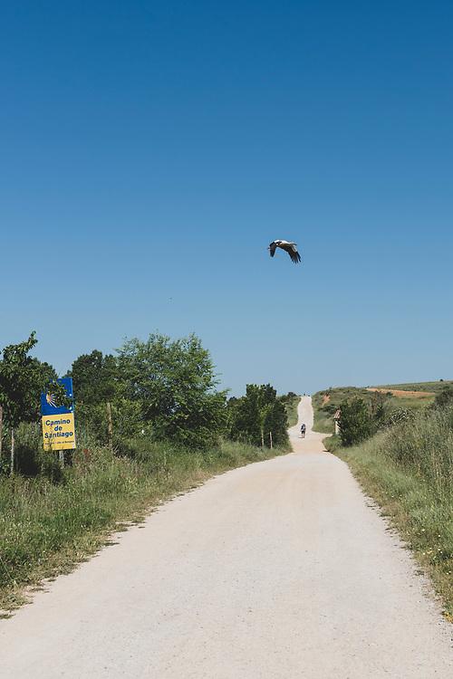 A stork flies over the Camino de Santiago a few kilometers east of Leon, Spain. (June 22, 2018)<br /> <br /> DAY 26: MANSILLA DE LAS MULAS TO LEON -- 19 KM