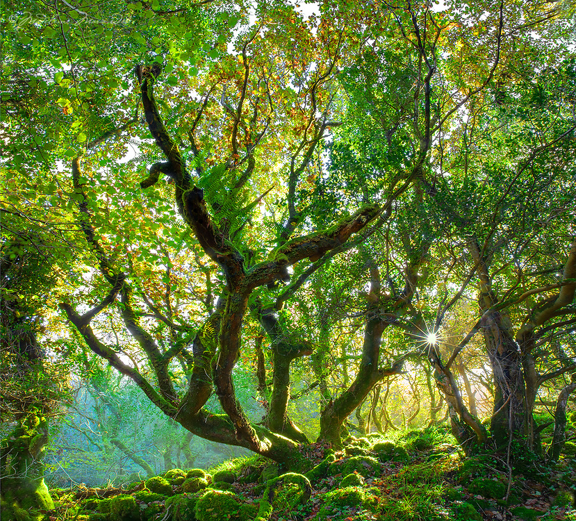 """""""Magical Woodlands""""<br /> <br /> County Kerry, Ireland<br /> Limited Edition"""
