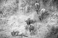 The Great Migration Masai Mara Gallery