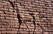 """Details of a mystical creature on the walls of the ancient city of Babylon.<br /> Babylon, an ancient city mention in the Bible is dated at around the 24th Century BC. <br /> In 1985, Saddam Hussein started rebuilding the city on top of the old ruins (because of this, artifacts and other finds may well be under the city by now), investing in both restoration and new construction. To the dismay of archaeologists, he inscribed his name on many of the bricks in imitation of Nebuchadnezzar. One frequent inscription reads: """"This was built by Saddam Hussein, son of Nebuchadnezzar, to glorify Iraq""""."""