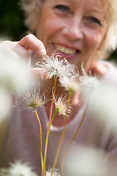 Carol Klein collecting seed of Pulsatilla vulgaris